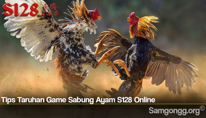 Tips Taruhan Game Sabung Ayam S128 Online